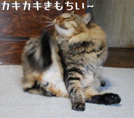 3_20101105084058.jpg