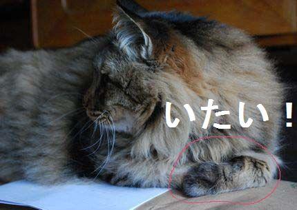 3_20101109071543.jpg