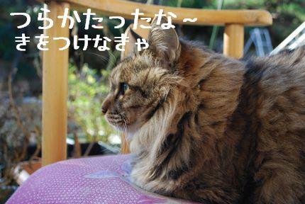 3_20101111082136.jpg