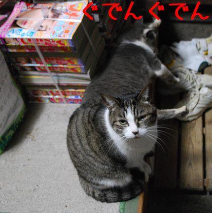 3_20101116084236.jpg