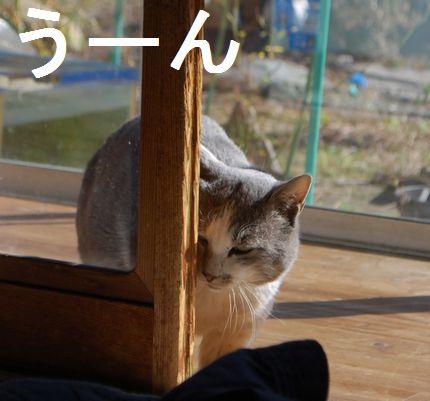 3_20101125092122.jpg