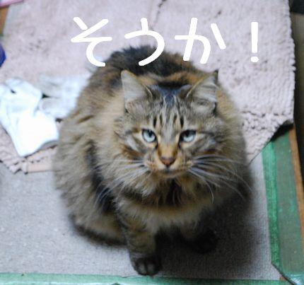 3_20101130083858.jpg