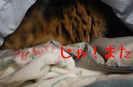 3_20101212193924.jpg