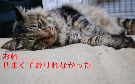 4_20100924100416.jpg