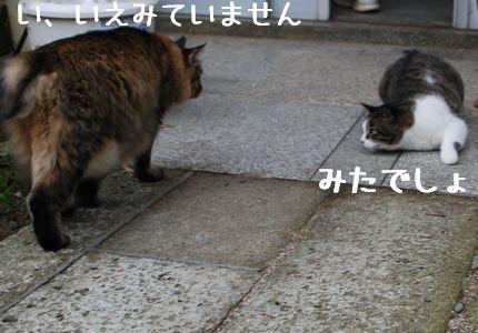 4_20100925124327.jpg