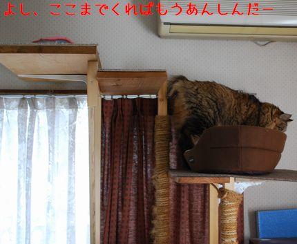 4_20101010112547.jpg
