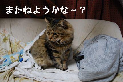 4_20101014100112.jpg