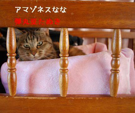 4_20101018084615.jpg