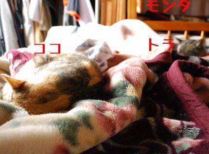 4_20101021083816.jpg