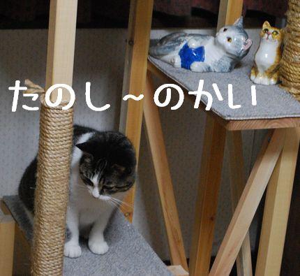 4_20101022202404.jpg