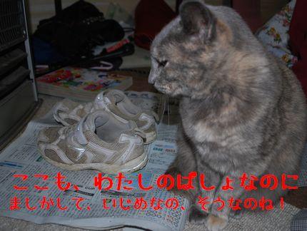 4_20101031100754.jpg