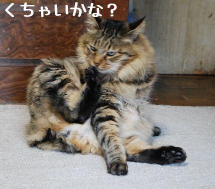 4_20101105084058.jpg