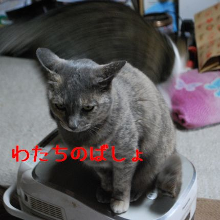 4_20101112083833.jpg