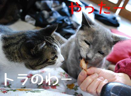 4_20101124091201.jpg