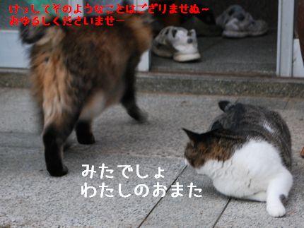 5_20100925123907.jpg