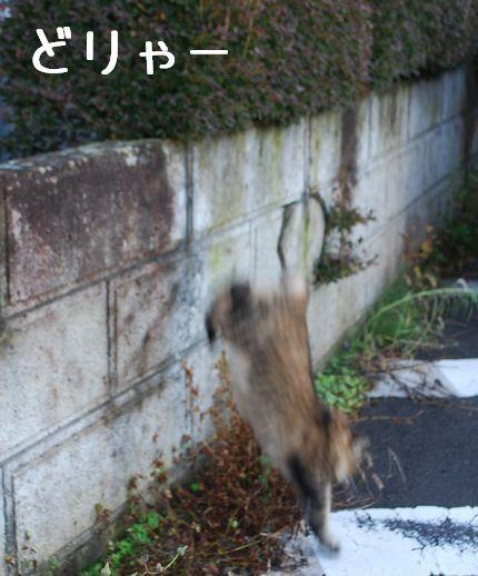 5_20101029092047.jpg