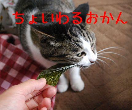 5_20101110081215.jpg