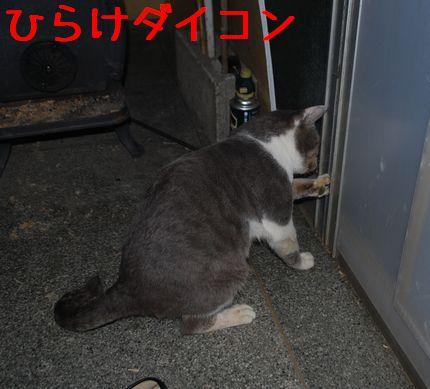 5_20101120224131.jpg