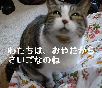 5_20101124091201.jpg