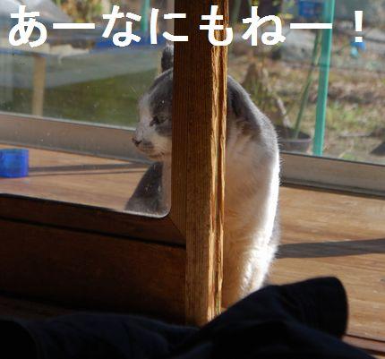 5_20101125092122.jpg