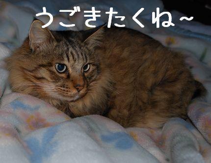 6_20101110081215.jpg