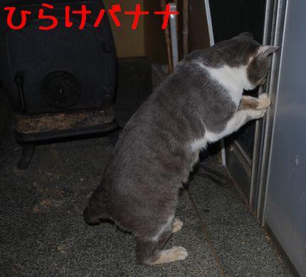 7_20101120224131.jpg