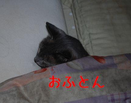 a_20101118083432.jpg