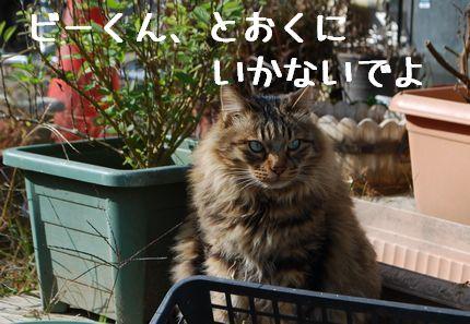a_20101120085958.jpg