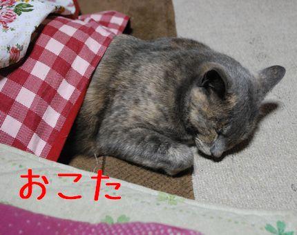 b_20101118083432.jpg