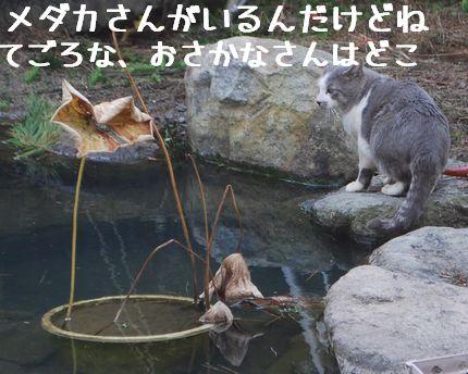 b_20101120085958.jpg