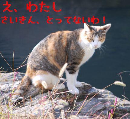 d_20101120085957.jpg