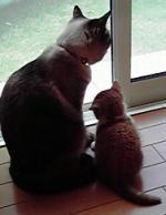 ミニとモコ