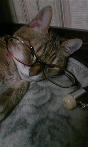 眼鏡ネコ2