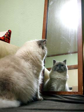 鏡の中のルナ