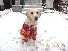 120229雪~~~♪-1