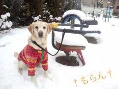 120229雪~~~♪-2