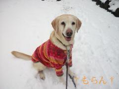 120229雪~~~♪-3