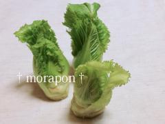 120303蕾菜と塩朧-1