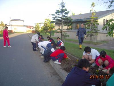 平成22年6月3日  八中花植え作業 009