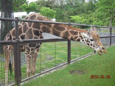 平成22年6月1日 大森山動物園 005