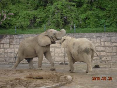 平成22年6月1日 大森山動物園 007