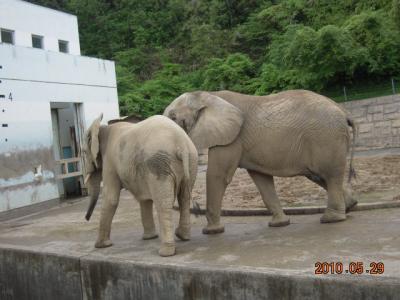 平成22年6月1日 大森山動物園 010