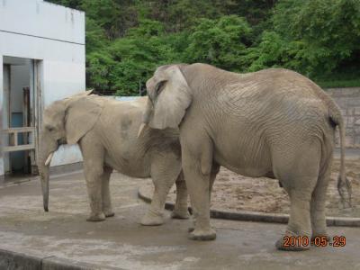 平成22年6月1日 大森山動物園 011
