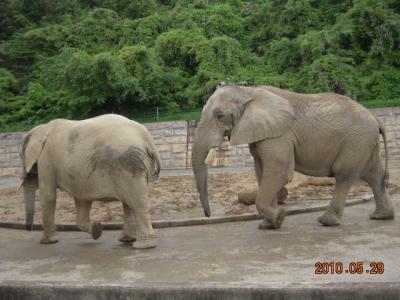 平成22年6月1日 大森山動物園 015