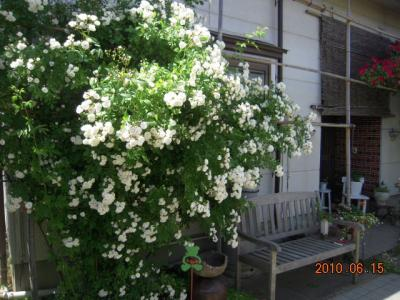 平成22年6月15日  もりかわバラ園 002