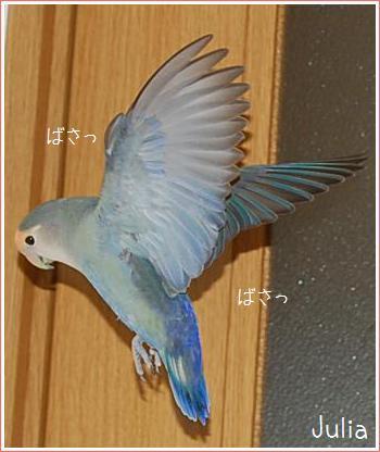 2010061603.jpg