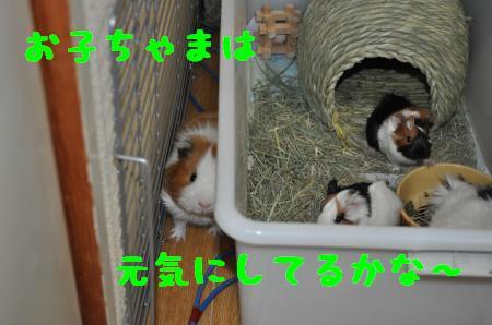 DSC_0193_convert_20100301212712.jpg