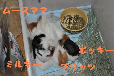 DSC_0217_convert_20100301212851.jpg