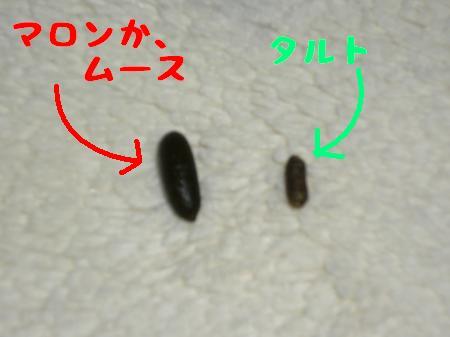 P1020139_convert_20091204225929.jpg