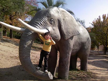 ゾウ2007年